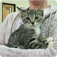 Adopt A Pet :: Carrie - Reston, VA