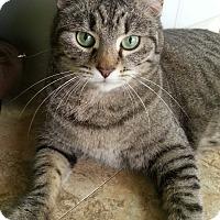 Adopt A Pet :: Tinka - Palmdale, CA