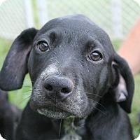 Adopt A Pet :: Alfalfa - Knoxville, TN