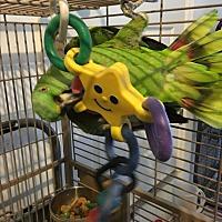 Adopt A Pet :: Kermit - Punta Gorda, FL