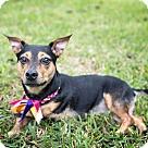 Adopt A Pet :: Millie