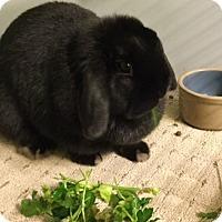 Adopt A Pet :: Bonnie - Moneta, VA