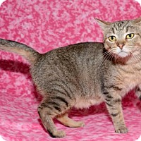 Adopt A Pet :: Cocoa - Salt Lake City, UT