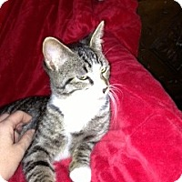 Adopt A Pet :: Sweet Pea - Simpsonville, SC