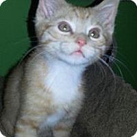 Adopt A Pet :: Tango - Clearfield, UT