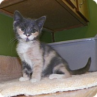 Adopt A Pet :: Ellie - Dover, OH