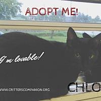 Adopt A Pet :: Chloe - Abrams, WI