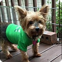 Adopt A Pet :: Lola - Brooksville, FL