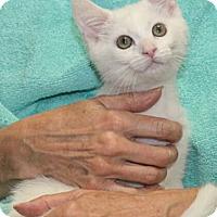 Adopt A Pet :: Brandi - Reston, VA