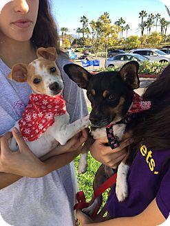Adopt A Pet :: Bella Cuddles n Mom Rosebud  - Corona, CA