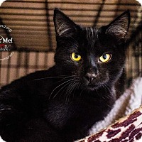 Adopt A Pet :: A..  Spookie - Mooresville, NC
