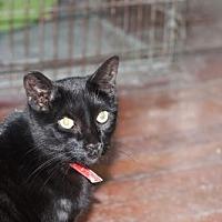 Adopt A Pet :: Alden - Liverpool, NY