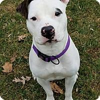 Adopt A Pet :: Fuss - Warminster, PA
