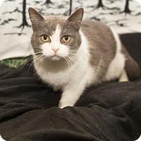 Adopt A Pet :: Mari - South Haven, MI
