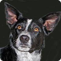 Adopt A Pet :: Blake - Ruidoso, NM