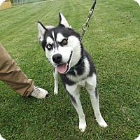 Adopt A Pet :: Hachi - Quincy, IN