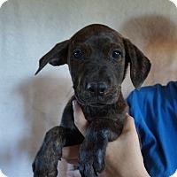 Adopt A Pet :: Grizz - Oviedo, FL