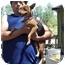 Photo 2 - Terrier (Unknown Type, Small) Mix Dog for adoption in Groveland, Florida - Mia