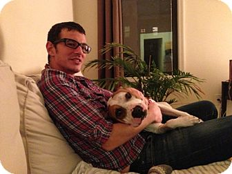 American Staffordshire Terrier Dog for adoption in Long Beach, New York - Carmela