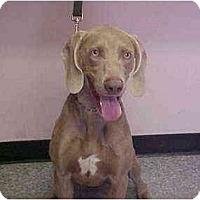 Adopt A Pet :: Lucas - Attica, NY