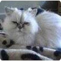 Adopt A Pet :: Eragon - Beverly Hills, CA