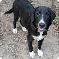 Adopt A Pet :: Dori - Harrison, AR
