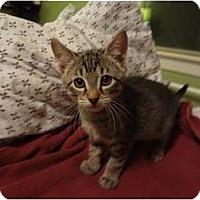 Adopt A Pet :: Magnificent Seven - Hurst, TX