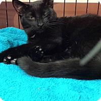 Adopt A Pet :: Henry (KL) - Little Falls, NJ