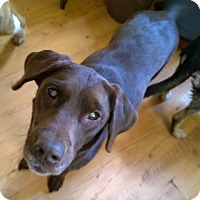 Adopt A Pet :: Riley - High View, WV
