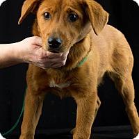 Adopt A Pet :: Cleopatra - Lewisville, IN