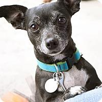 Adopt A Pet :: Maebe - Marietta, GA