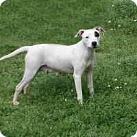 Adopt A Pet :: Mystic - Lufkin, TX