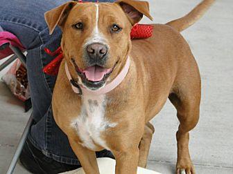 Hound (Unknown Type) Mix Dog for adoption in Brooksville, Florida - Rose