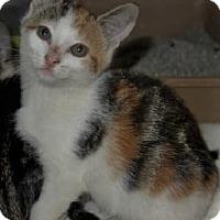 Adopt A Pet :: Bailey - Chattanooga, TN