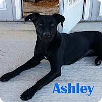 Adopt A Pet :: Ashley - Orangeburg, SC