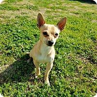 Adopt A Pet :: Buddy - Yuba City, CA