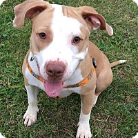 Adopt A Pet :: Lizzy - in foster - South Haven, MI