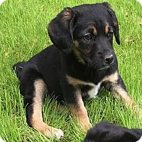Adopt A Pet :: Cookie (ETAA) - Harrisonburg, VA