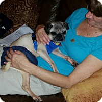 Adopt A Pet :: Mr. Miyagi - Austin, TX