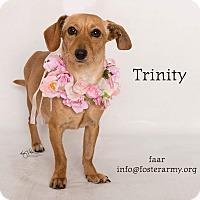 Adopt A Pet :: Trinity - Riverside, CA