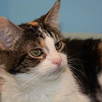 Adopt A Pet :: Melody - Cincinnati, OH