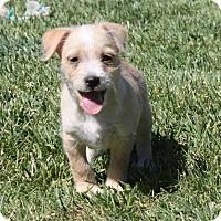 Adopt A Pet :: Hootie - Henderson, NV