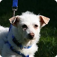 Adopt A Pet :: Copito - Carlsbad, CA