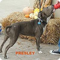 Adopt A Pet :: Presley - Houston, TX