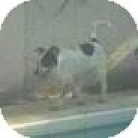 Adopt A Pet :: Jack Tripper -blue heeler! - Phoenix, AZ
