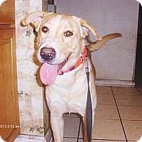 Adopt A Pet :: Baxley - Jacksonville, FL