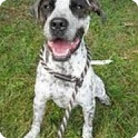 Adopt A Pet :: Parker - Lewisville, IN