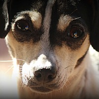 Adopt A Pet :: Lady Bird (Birdie) - Greenville, SC