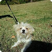Adopt A Pet :: Dinky - Arlington, TN