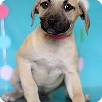 Adopt A Pet :: Giraffe - Waldorf, MD